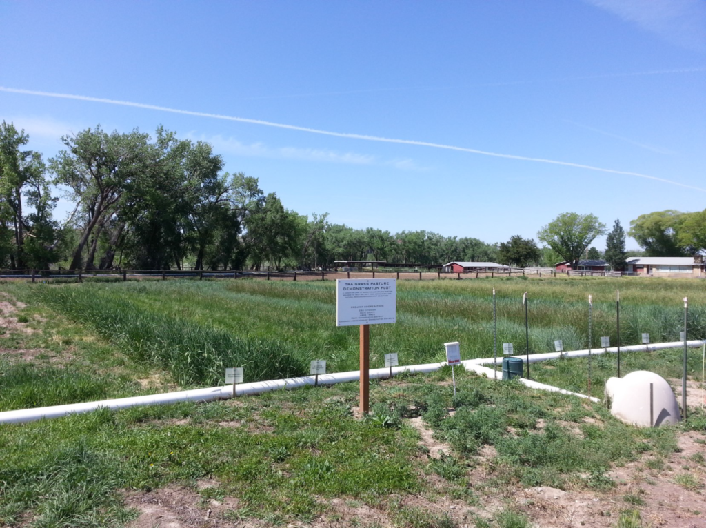 Pasture Demonstration Plot