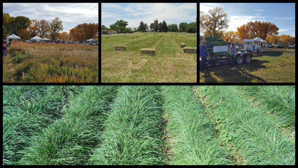 Pasture Demonstration Plot Pictures