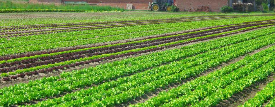 salad-976336_1920 edited