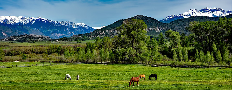 Horses in a Colorado Pasture