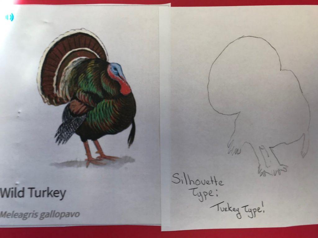 3rd Grade PBL's on Animals
